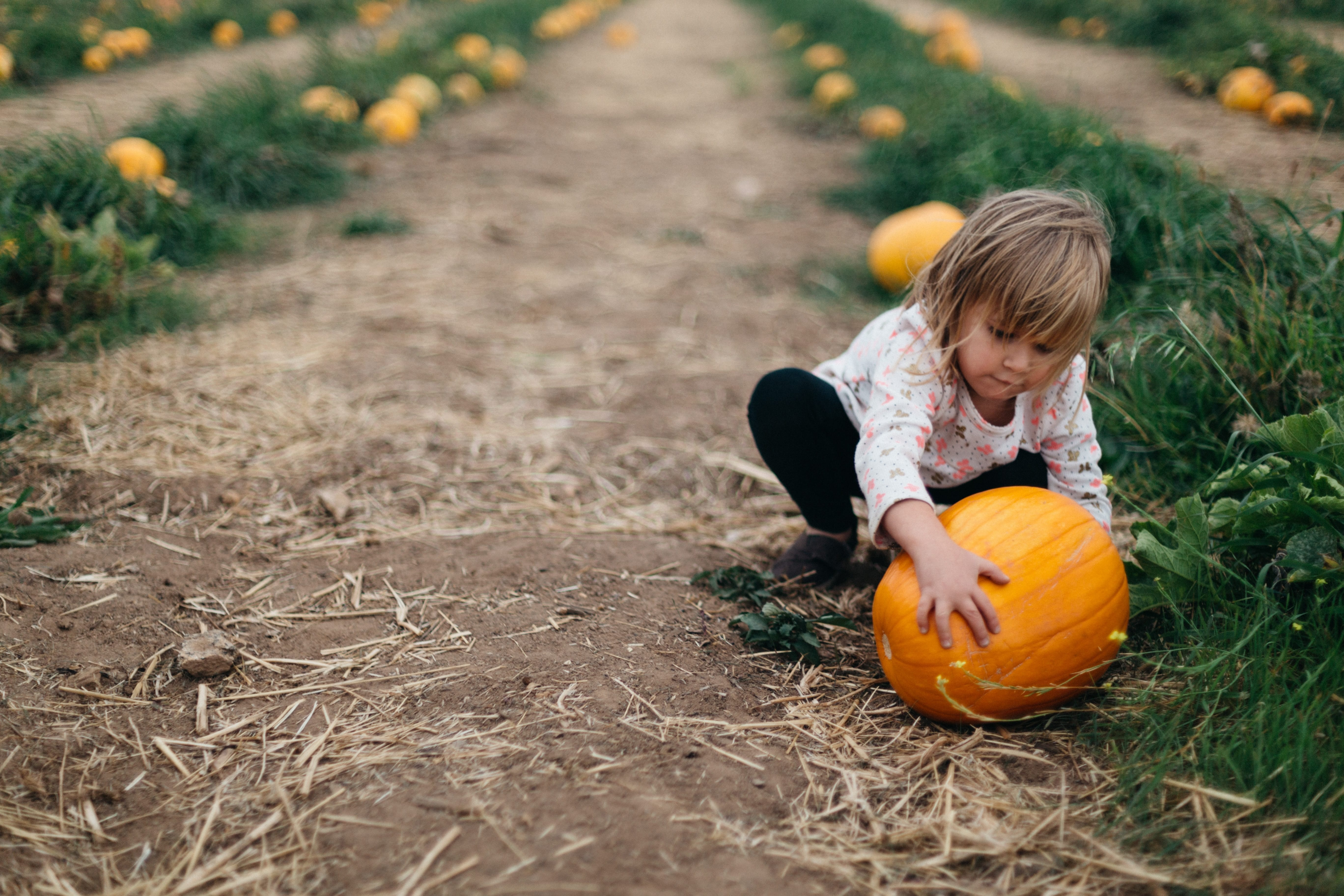 Child Picking a Pumpkin for Science Activities