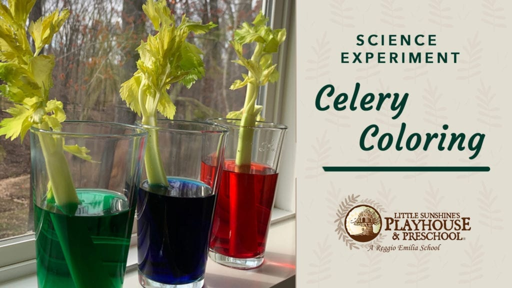 Celery Coloring Science Experiment Graphic
